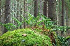 Χρώματα του φθινοπώρου Στοκ φωτογραφίες με δικαίωμα ελεύθερης χρήσης