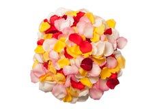 Χρώματα των ροδαλών πετάλων Στοκ εικόνα με δικαίωμα ελεύθερης χρήσης