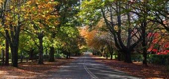 Χρώματα φθινοπώρου ΑΜ Wilson Στοκ Εικόνες