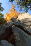 Χρώματα φθινοπώρου - βράχος και δέντρο Στοκ Φωτογραφίες
