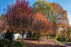 Χρώματα φθινοπώρου γειτονιάς στοκ εικόνες