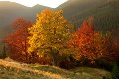 Χρώματα φθινοπώρου Δάσος βουνών Στοκ Εικόνες