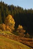 Χρώματα φθινοπώρου Δάσος βουνών Στοκ φωτογραφίες με δικαίωμα ελεύθερης χρήσης