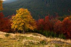 Χρώματα φθινοπώρου Δάσος βουνών Στοκ Φωτογραφία