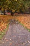 Χρώματα φθινοπώρου σε ένα πάρκο με τα φύλλα στο έδαφος στοκ φωτογραφίες με δικαίωμα ελεύθερης χρήσης