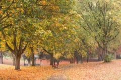 Χρώματα φθινοπώρου σε ένα πάρκο με τα φύλλα στο έδαφος στοκ εικόνες με δικαίωμα ελεύθερης χρήσης