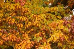 Χρώματα φθινοπώρου σε ένα πάρκο με τα φύλλα στο έδαφος στοκ φωτογραφία με δικαίωμα ελεύθερης χρήσης