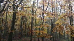 Χρώματα φθινοπώρου σε μια αγγλική δασώδη περιοχή Στοκ φωτογραφία με δικαίωμα ελεύθερης χρήσης
