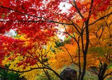 Χρώματα φθινοπώρου στα δέντρα ενός βοτανικού κήπου στοκ εικόνες