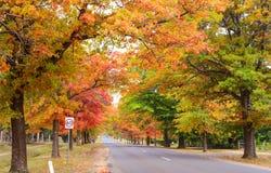 Χρώματα φθινοπώρου στην επαρχία Στοκ εικόνα με δικαίωμα ελεύθερης χρήσης