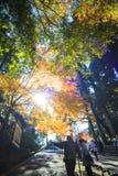 Χρώματα φθινοπώρου στην Ιαπωνία, όμορφα φύλλα φθινοπώρου Στοκ φωτογραφία με δικαίωμα ελεύθερης χρήσης