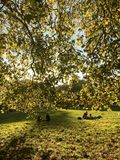 Χρώματα φθινοπώρου στην πόλη του Λονδίνου στοκ εικόνα