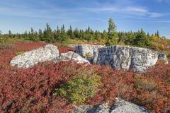 Χρώματα φθινοπώρου στους βράχους αρκούδων στοκ εικόνες