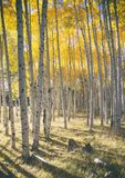 Χρώματα φθινοπώρου στο δάσος της Aspen Στοκ Φωτογραφίες