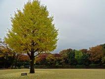 Χρώματα φθινοπώρου στο πάρκο Kitanomaru, Τόκιο Στοκ Φωτογραφίες