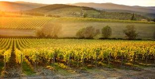 Χρώματα φθινοπώρου των αμπελώνων Chianti μεταξύ της Σιένα και της Φλωρεντίας Ιταλία στοκ εικόνα