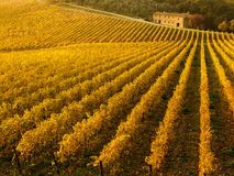 Χρώματα φθινοπώρου των αμπελώνων Chianti μεταξύ της Σιένα και της Φλωρεντίας Ιταλία στοκ εικόνες με δικαίωμα ελεύθερης χρήσης