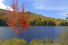Χρώματα φθινοπώρου - φύλλα πτώσης στο Adirondacks, Νέα Υόρκη στοκ εικόνες