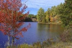Χρώματα φθινοπώρου - φύλλα πτώσης στο Adirondacks, Νέα Υόρκη Στοκ Φωτογραφίες