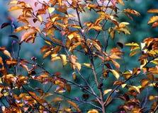 χρώματα φθινοπώρου Στοκ εικόνες με δικαίωμα ελεύθερης χρήσης