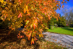 χρώματα φθινοπώρου Στοκ εικόνα με δικαίωμα ελεύθερης χρήσης