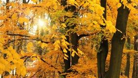 Χρώματα φθινοπώρου απόθεμα βίντεο