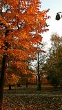 Χρώματα φθινοπώρου Στοκ Φωτογραφία