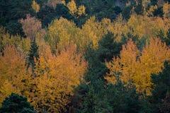 Χρώματα φθινοπώρου Στοκ φωτογραφίες με δικαίωμα ελεύθερης χρήσης