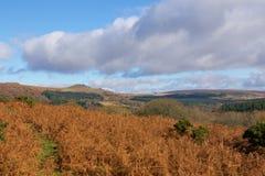 Χρώματα φθινοπώρου Dartmoor Στοκ Φωτογραφία