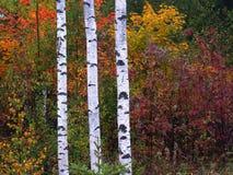 χρώματα φιλανδικά Στοκ εικόνα με δικαίωμα ελεύθερης χρήσης