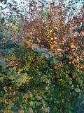 Χρώματα φύσης στοκ εικόνες