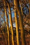 χρώματα χρυσά Στοκ εικόνες με δικαίωμα ελεύθερης χρήσης