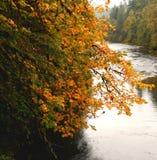 Χρώματα όχθεων ποταμού Στοκ Φωτογραφία