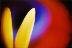 χρώματα Στοκ εικόνες με δικαίωμα ελεύθερης χρήσης