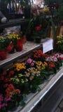 χρώματα Στοκ Φωτογραφία