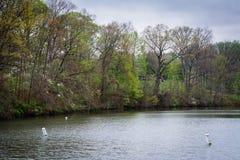 Χρώμα άνοιξη κατά μήκος της λίμνης Roland, στο πάρκο του Roland λιμνών, σε Baltimor στοκ φωτογραφίες