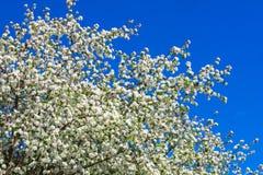 Χρώμα δέντρων της Apple το σπόρος-φέρον μέρος εγκαταστάσεων, σύσταση Στοκ φωτογραφία με δικαίωμα ελεύθερης χρήσης