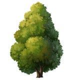 χρώμα δέντρων Στοκ Εικόνα