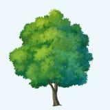 χρώμα δέντρων Στοκ εικόνες με δικαίωμα ελεύθερης χρήσης