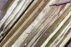 χρώμα ανασκόπησης που ξεφλουδίζεται Στοκ Φωτογραφία
