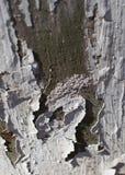Χρώμα αποφλοίωσης στο παλαιό ξύλο στοκ εικόνα