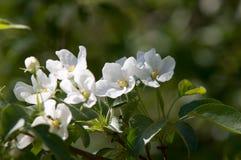 Χρώμα δέντρων της Apple το σπόρος-φέρον μέρος εγκαταστάσεων, σύσταση Στοκ φωτογραφίες με δικαίωμα ελεύθερης χρήσης