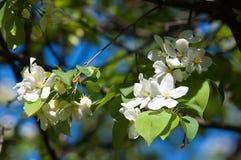 Χρώμα δέντρων της Apple το σπόρος-φέρον μέρος εγκαταστάσεων, σύσταση Στοκ εικόνες με δικαίωμα ελεύθερης χρήσης