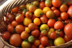 Χρώμα, ντομάτες, καλάθι, καλοκαίρι, κόκκινο, κίτρινο, σύσταση, ακατέργαστος, φυσική, συστατικό, λαχανικό, Στοκ εικόνα με δικαίωμα ελεύθερης χρήσης