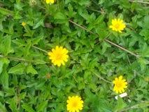 Χρώμα δοντιών λουλουδιών Στοκ εικόνα με δικαίωμα ελεύθερης χρήσης