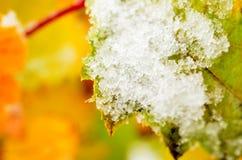 Χρώμα ουράνιων τόξων redcurrant στο θάμνο με το χιόνι στον πρόσφατο αρκτικό κύκλο στοκ εικόνες