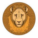 Χρώμα προσώπου λιονταριών ρεαλιστικό Στοκ εικόνες με δικαίωμα ελεύθερης χρήσης