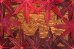 Χρώμα πτώσης - κόκκινα φύλλα Στοκ Εικόνες
