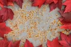Χρώμα πτώσης - κόκκινα φύλλα Στοκ Φωτογραφία