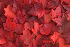 Χρώμα πτώσης - κόκκινα φύλλα Στοκ εικόνες με δικαίωμα ελεύθερης χρήσης
